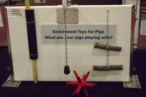 pig toys